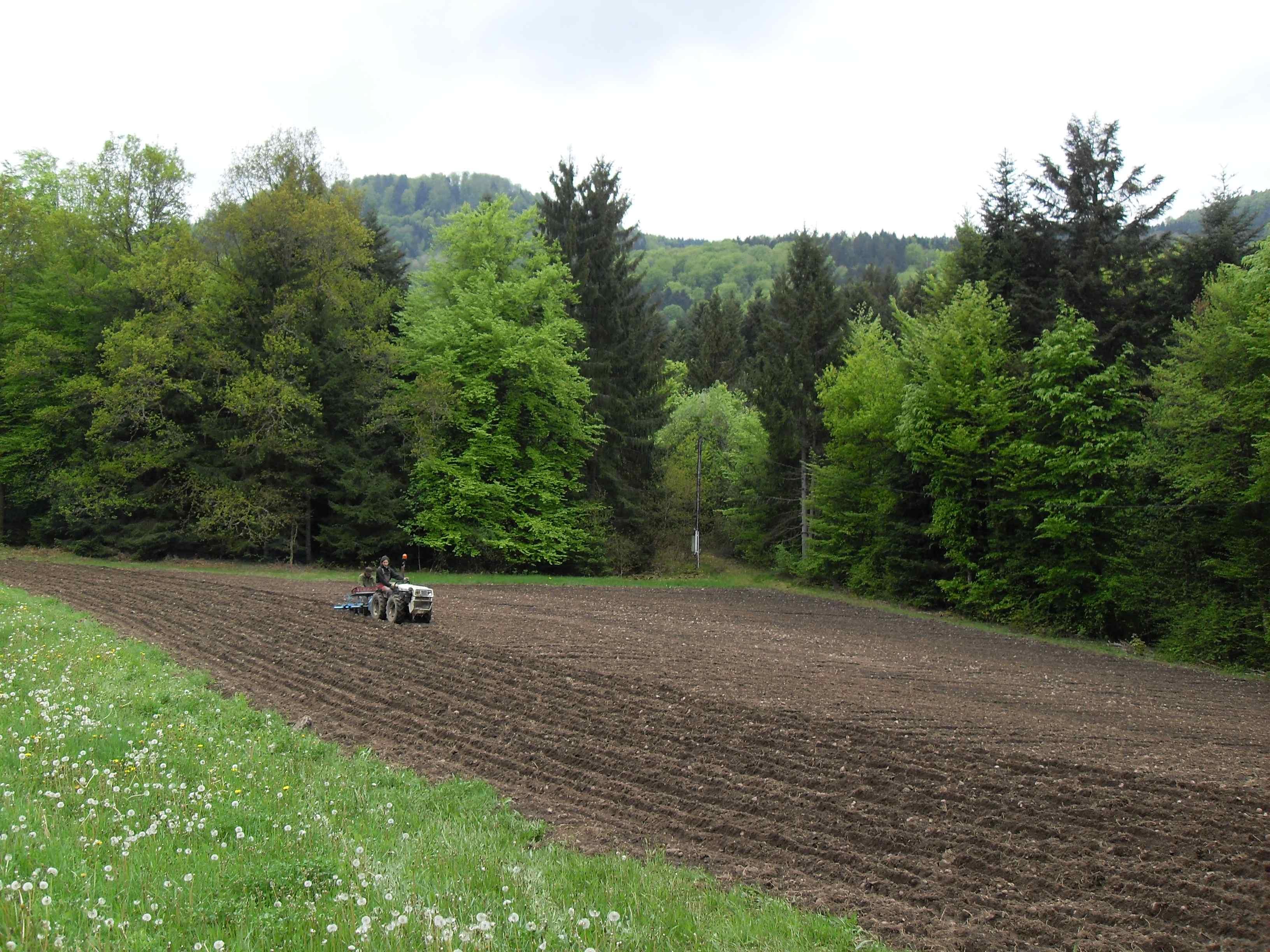 Plantation des pommes de terre les choucas gourmands - Periode plantation pomme de terre ...